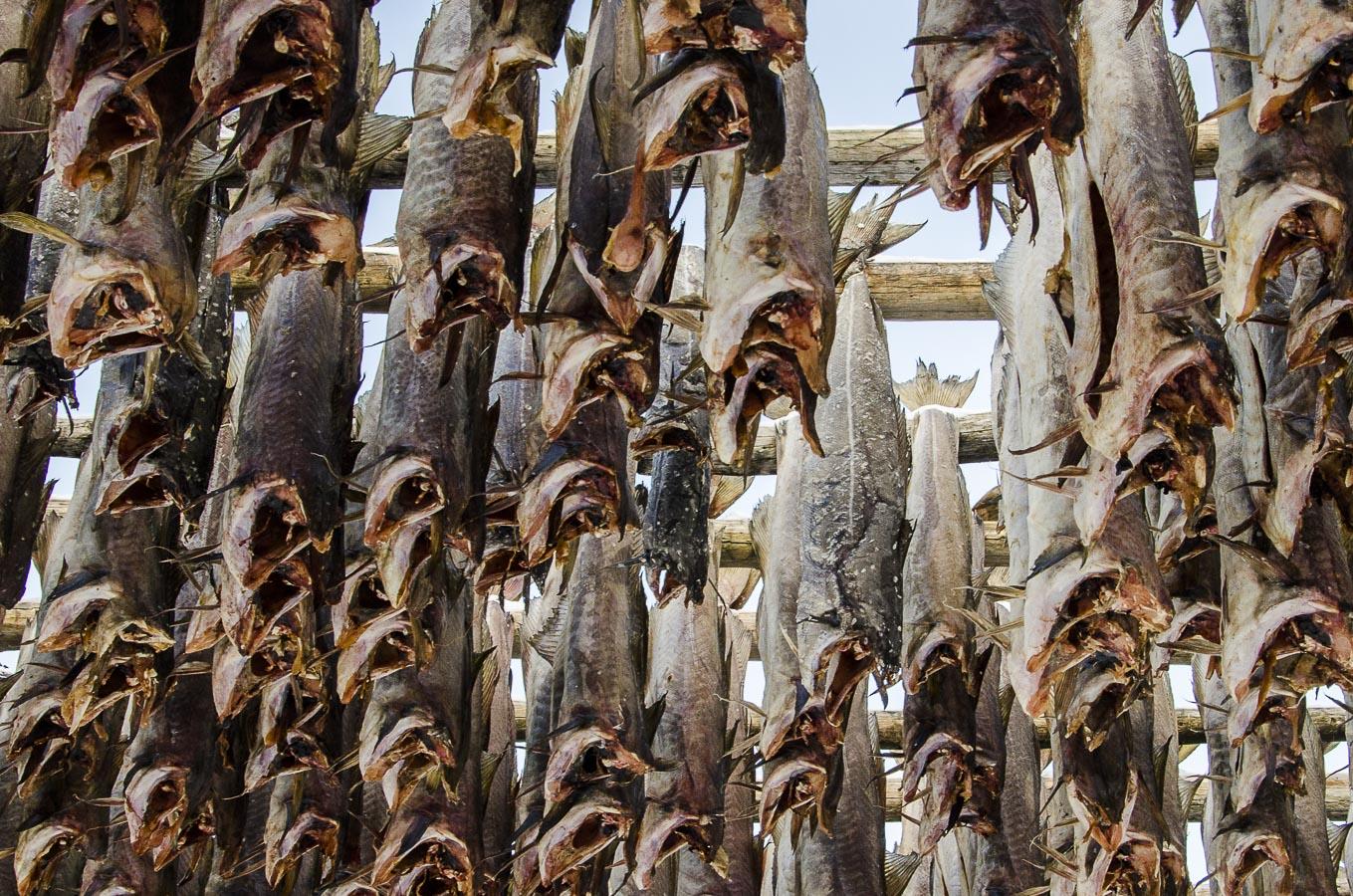 W przetwórni ryb