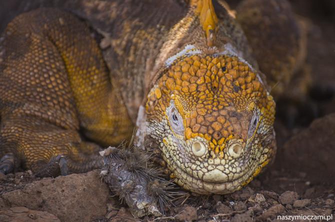 Mieszkańcy wysp Galapagos