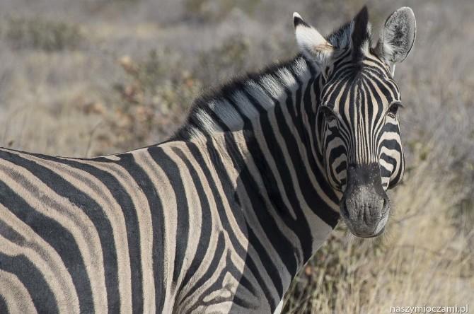 Park Narodowy Etosha – DIY safari